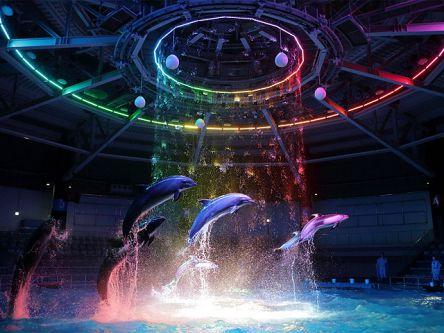 幻想的な夜の水族館へ行こう!品川ナイトデートプラン