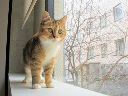 運命の猫に会えるかも!?人と猫を結ぶ熊本の保護猫カフェ
