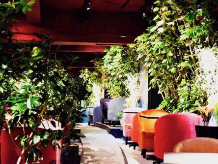 森にいるようなマイナスイオンで癒される、神戸・三宮のおしゃれカフェ