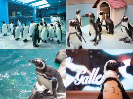 距離が近ッ!ペンギンと近くで触れ合える、おすすめ水族館&カフェ4選