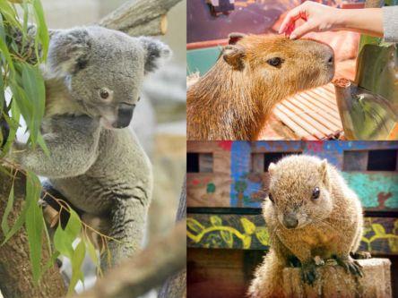 関東・東京近郊でかわいい動物に癒される!穴場のおすすめ動物園3選