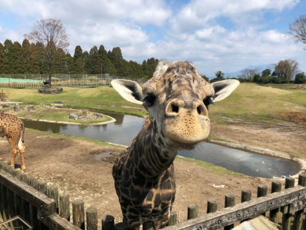 九州でアフリカ体験!?平川動物公園のかわいい動物ベビーたち