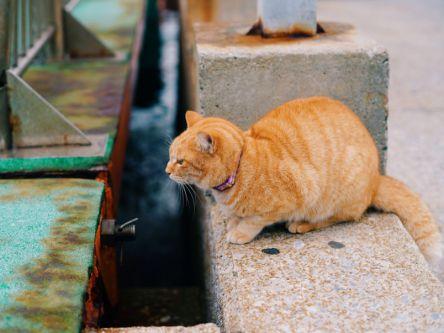 福岡で見つけた絶景「光の道」と癒しの猫島「相島」【もろんのんの旅する写真日記vol.2】