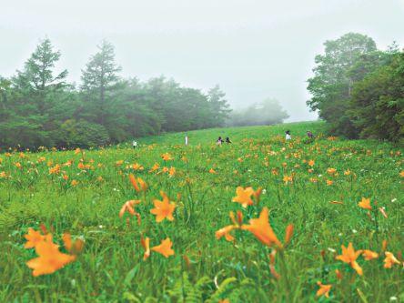 霧降高原の可憐な花と清々しい空気でリフレッシュする一日を!