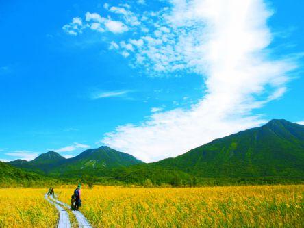奥日光の湿原で夏の絶景に会える♪ 戦場ヶ原ハイキング