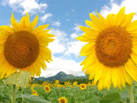 忘れられない、夏休みになる!美しすぎる絶景&グルメスポット6選@岩手ドライブ旅