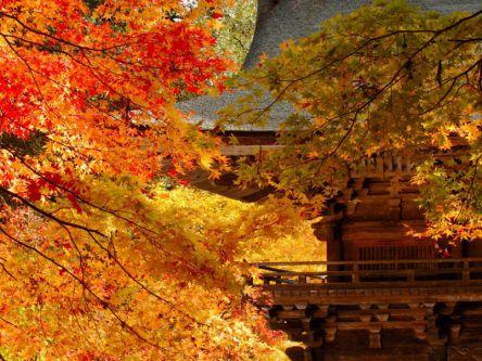 岐阜県でおすすめの紅葉名所~見頃やライトアップなどの2020年情報~