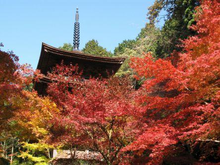 滋賀県でおすすめの紅葉名所~見頃やライトアップなどの2020年情報~