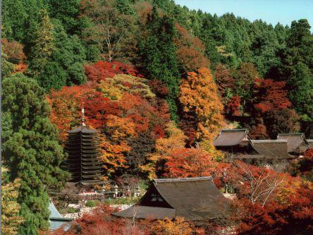 奈良県でおすすめの紅葉名所~見頃やライトアップなどの2020年情報~