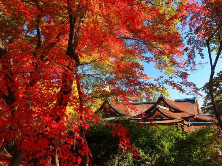 京都「洛中・洛西」のおすすめ紅葉名所2020~北野天満宮など~