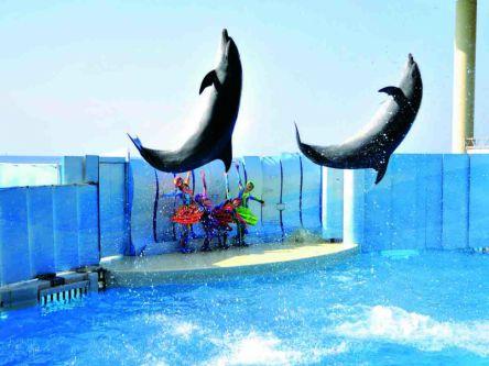 江の島や富士山を望む絶好のロケーションに立つ「新江ノ島水族館」