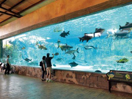 シンガポールの「リバーサファリ」で大河に生きる魚や動物とパンダに会う!