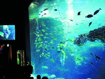 「ヒルナンデス!」で紹介された芸達者な動物も!いま行くべき全国の動物園&水族館10選(後編)