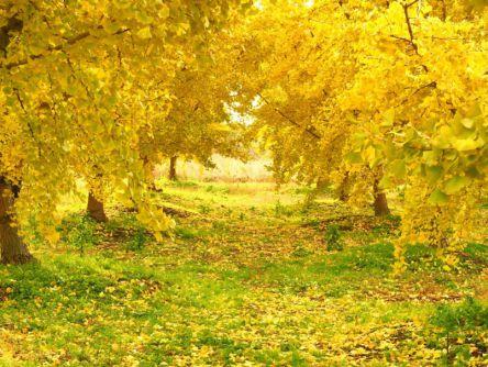 秋の紅葉なら絶対ここ!名古屋周辺の2大絶景スポット