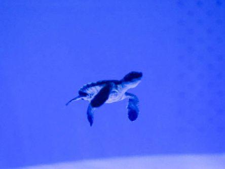かわいいアオウミガメの赤ちゃんに会える!瀬戸内海がぎゅっとつまった「マリホ水族館」