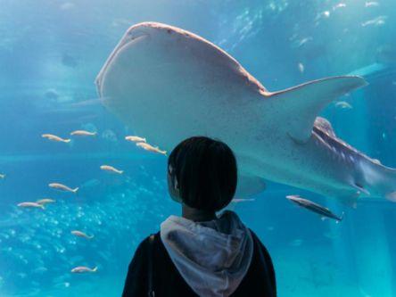 海遊館の大きなジンベエザメに癒されてみませんか?【Masaの関西カメラさんぽ】