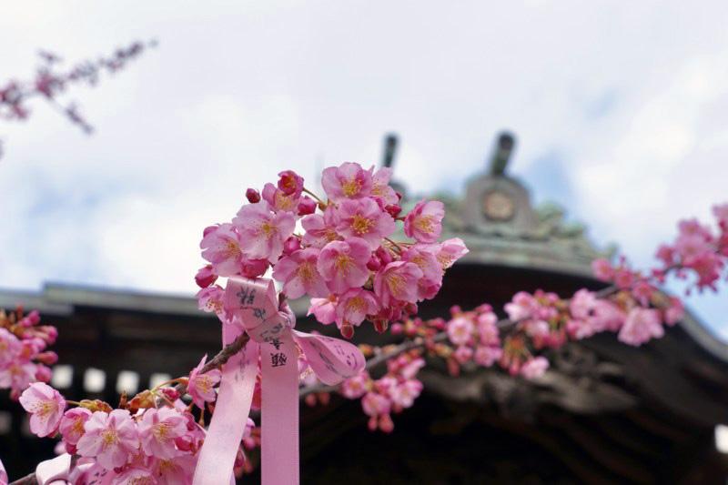 ©神社・御朱印メモ 「えんむすびの花帯」初穂料:500円