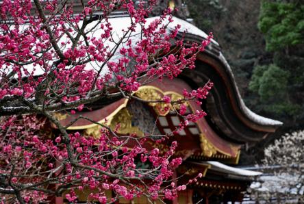 令和ゆかりの地は今だから行きたい!梅が見ごろの太宰府で梅が枝餅をパクリ!