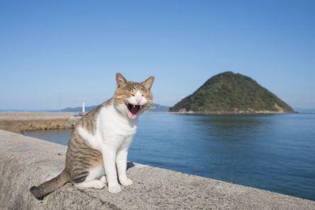 猫写真家沖昌之さんが撮った!香川の離島「佐柳島」で気ままなにゃんこたちをキャッチ!
