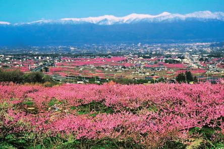 桃の生産量日本一!30万本の桃が花開く山梨県笛吹市で行きたい桃スポット4選
