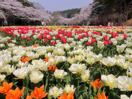 浜名湖からはじまる感動四季めぐり 花・庭園スポット7選