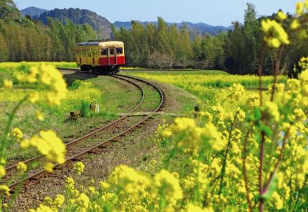 春は菜の花列車「いすみ鉄道」と「小湊鉄道」でGO!予約制ヘルシーランチの旅へ