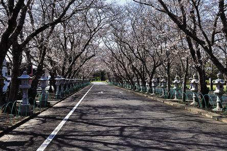 これからは桜トンネルも!鹿児島・知覧平和公園で平和の尊さを感じる