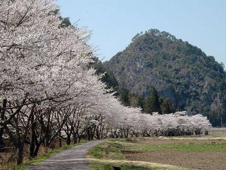 岐阜県のお花見・桜の名所(2021)夜桜・ライトアップや桜祭りも