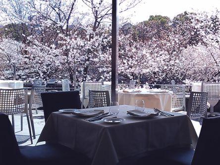 室内なら寒くない&花粉症にも優しい♪桜をのぞむお店でポカポカお花見を楽しむ