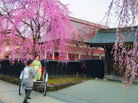 桜の季節に人力車で楽しみたい! 秋田・角館 外町の商家めぐり