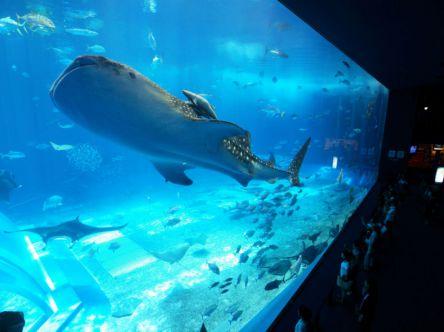 憧れの大人気水族館がもっとよくわかる!「沖縄美ら海水族館」徹底ナビ