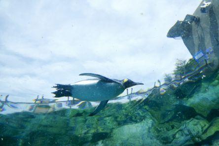 ホッキョクグマやペンギンを間近で!人気の「旭山動物園」に行こう