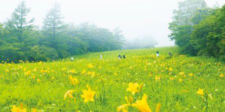 夏の絶景・ニッコウキスゲを観賞!霧降高原でアクティビティ満喫プラン