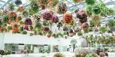 日本初のスタバも!お花とデジタルが融合した新感覚フラワースポットへ