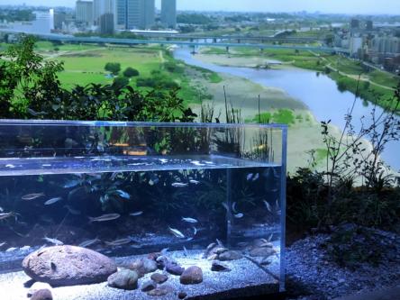 「カワスイ 川崎水族館」がニューオープン!世界の水辺を旅するように楽しむ