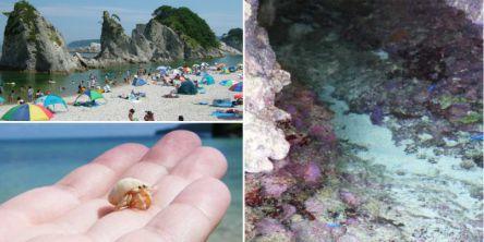 自然の水族館?! 磯遊びできる全国のビーチ・海水浴場