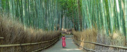 京都観光は「早朝」が◎絶景プロデューサー・詩歩さんオススメの京都案内