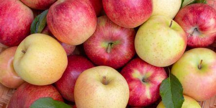 福島県でおすすめのりんご狩り(2020)時期や食べ放題、品種は?