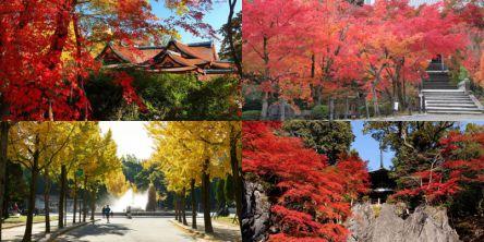 関西のフォトジェニックな紅葉名所~おすすめランキング2020~