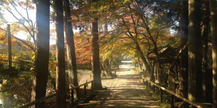 箱根(神奈川県)のおすすめ紅葉名所2020~強羅~仙石原~芦ノ湖など~