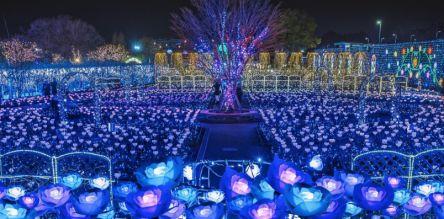 日本三大イルミのあしかがフラワーパーク『光の花の庭~Flower Fantasy2020~』開催決定
