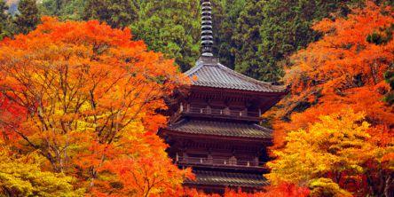 兵庫県でおすすめの紅葉名所~見頃やライトアップなどの2020年情報~
