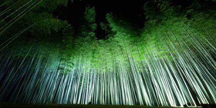 この冬行きたいイルミネーション!竹のライトアップが幻想的な『Bamboo Winter Lights 2020』
