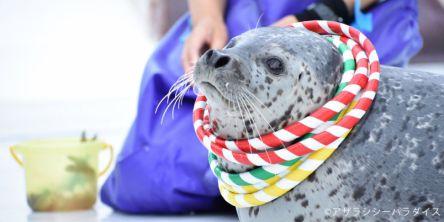 いきものたちとの触れ合い体験!北海道で癒され冬のアクティビティ