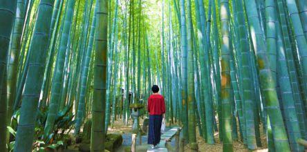 約2000本の孟宗竹が広がる鎌倉・報国寺「竹の庭」で優雅なお抹茶タイム