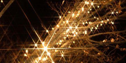 福井県のおすすめイルミネーション(2020-2021)クリスマスや冬デートに!