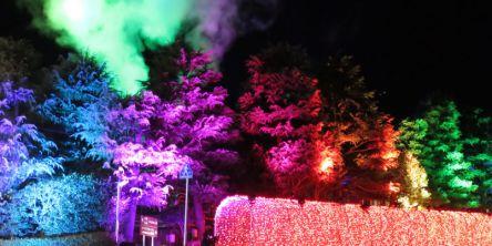 大分県のおすすめイルミネーション(2020-2021)クリスマスや冬デートに!