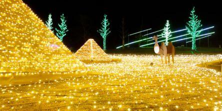 鹿児島県のおすすめイルミネーション(2020-2021)クリスマスや冬デートに!