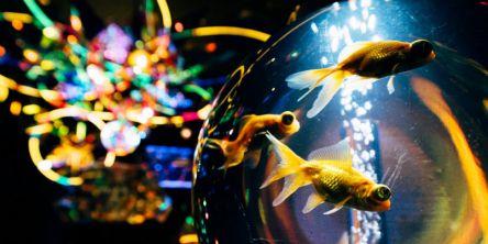 横浜で宇宙旅行!?「宇宙×アクアリウム」がテーマの新感覚エンタメ水族館が期間限定オープン