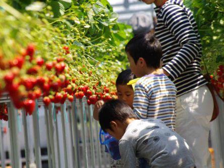 徳島県でおすすめのいちご狩り2021(時期:12月~6月)食べ放題が人気!